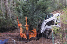Tree Transplanting-transplanting tress & shrubs, Puget Sound